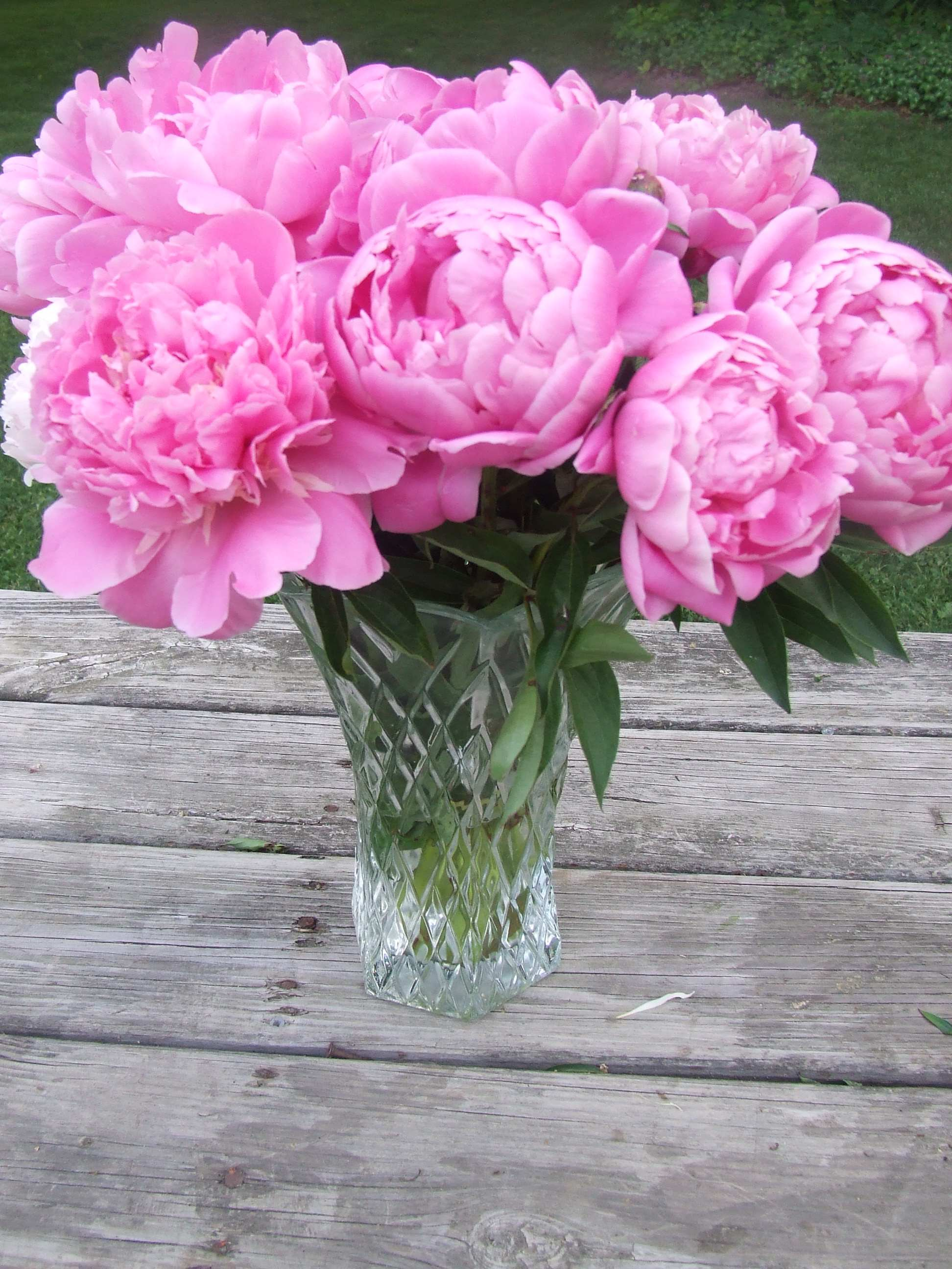 Vase_of_Pink_Peonies_Flowers
