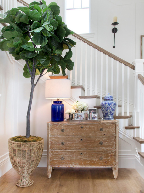 Fiddle Leaf Fig Tree | KRISTY WICKS