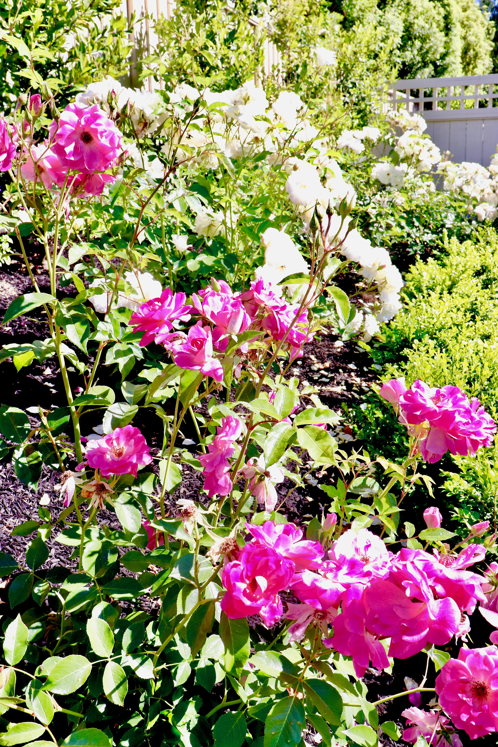 The Flowers In My Garden + Sources