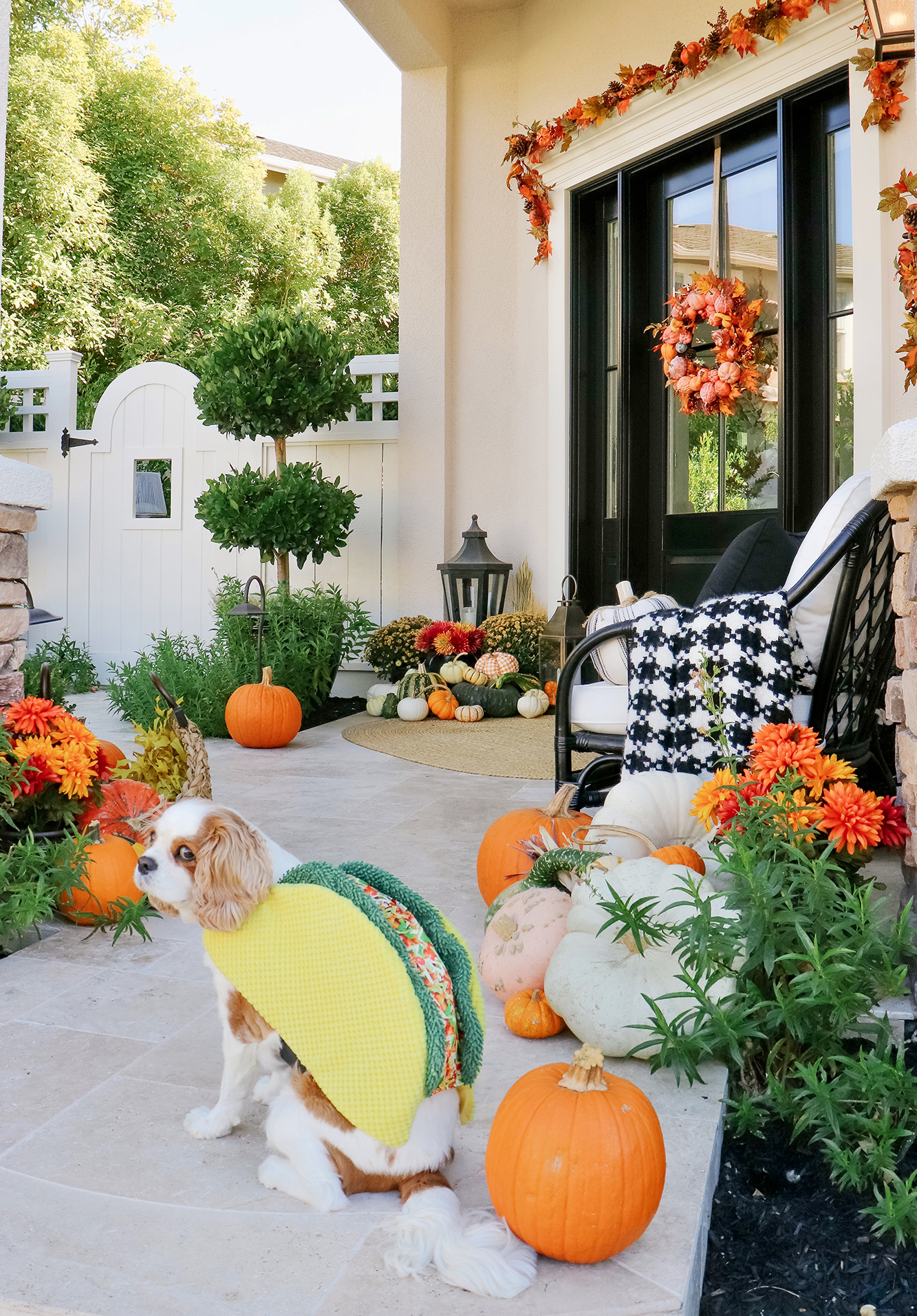 Affordable Pet Halloween Costumes & The Best Halloween Candy. We rounded up the cutest dog Halloween costumes that are under $8!