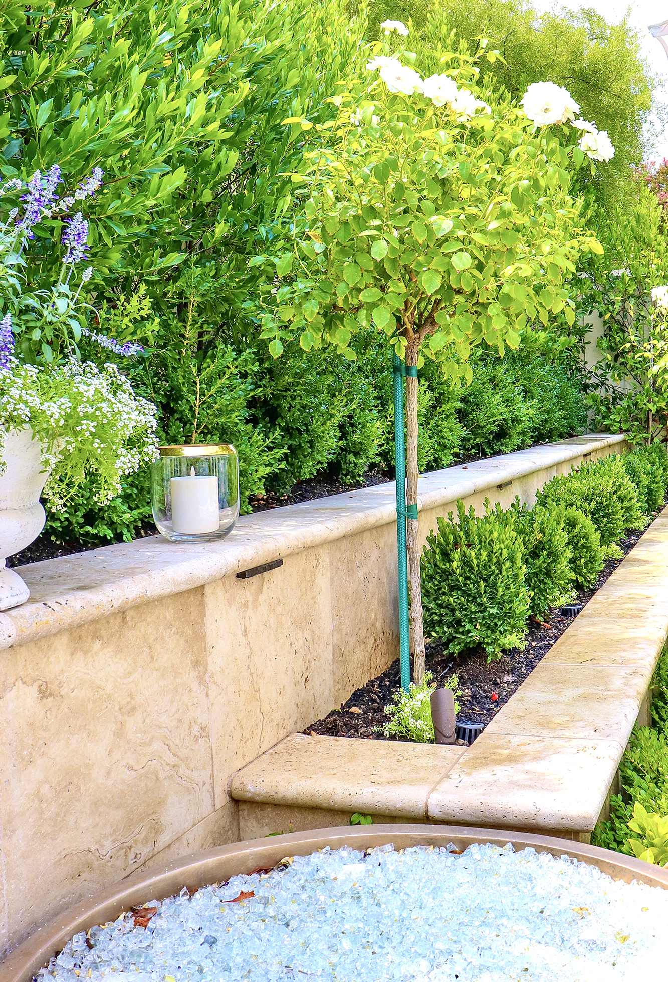 Formal Garden Plants // New boxwood in the backyard. How to design a perfect English Formal Garden & how I added new English Boxwood.