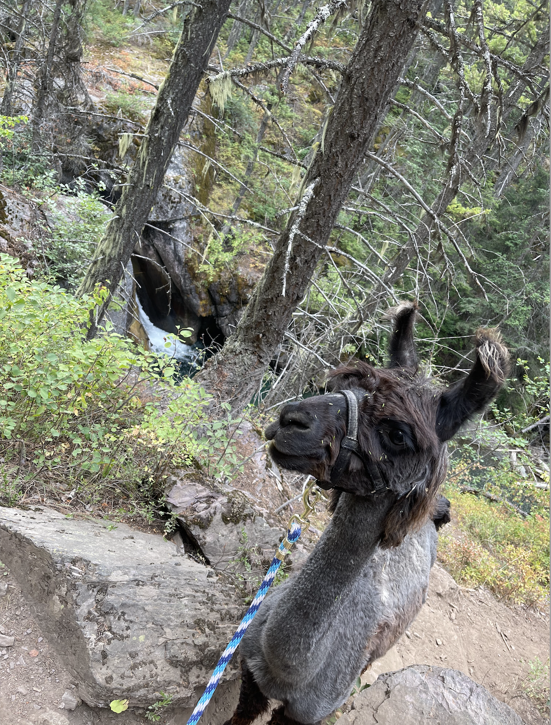 Montana Travel Guide - We rounded up our entire hiking and adventure trip to Glacier National Park & Big Sky Country with this helpful planning post!
